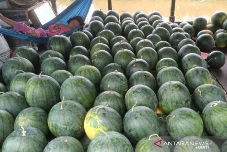 Segarnya menikmati panen buah semangka Muning Baru Nagara