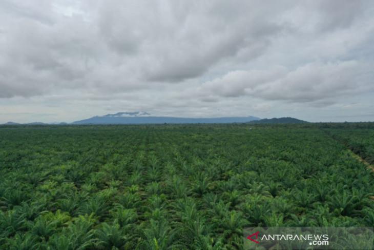 Gov't should consider extending palm oil moratorium: SPOS Indonesia