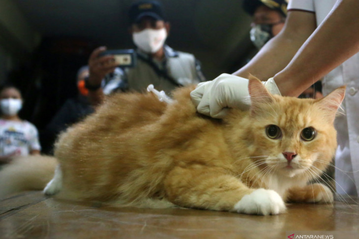 Ogan Komering Ulu menyediakan layanan gratis vaksinasi hewan peliharaan