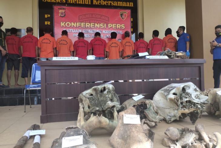 Ungkap kasus kematian lima ekor gajah, Polres Aceh Jaya diapresiasi