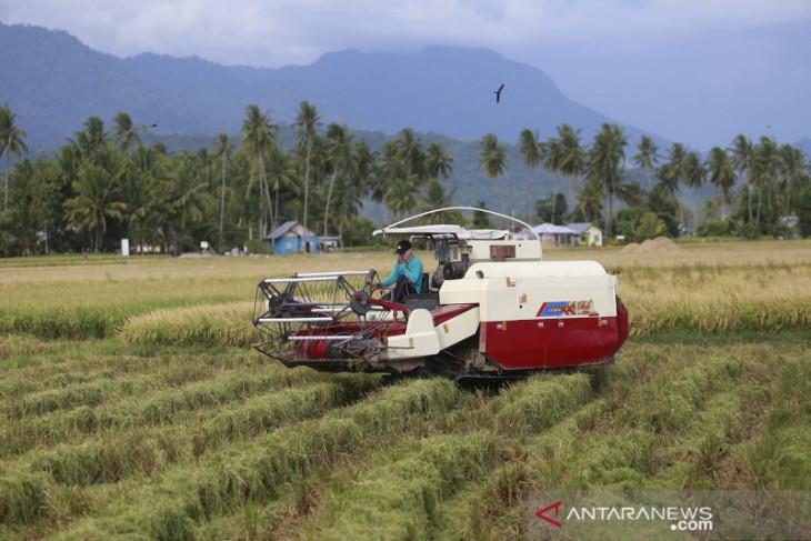 Badan Karantina Pertanian Gorontalo dorong hilirisasi komoditas