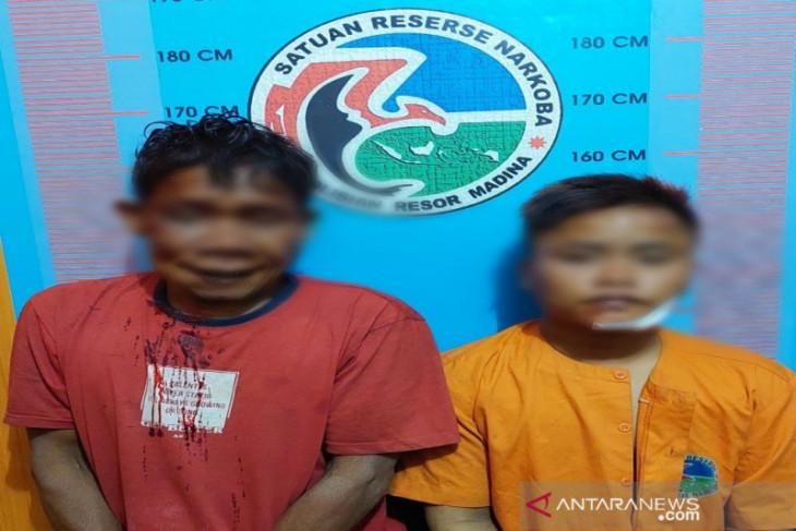 Dua bandar ganja di Madina ditangkap, satu pelaku terpaksa ditembak