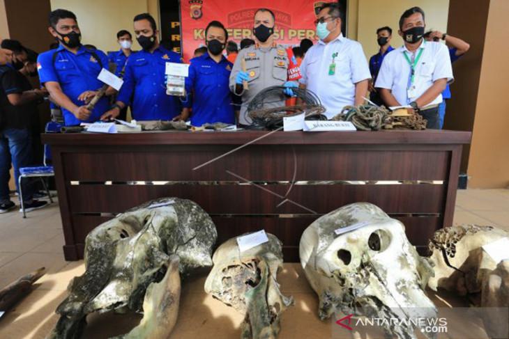 LSM desak 11 pelaku kematian lima ekor gajah di Aceh Jaya dihukum berat