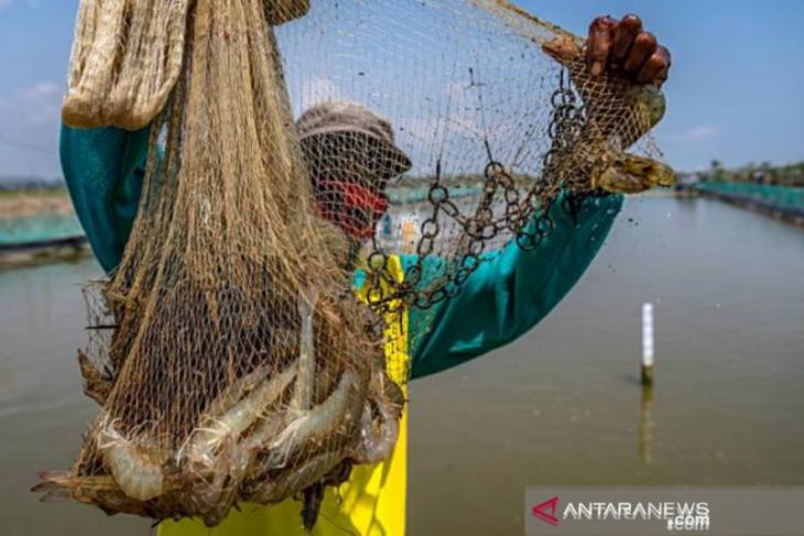 Pendangkalan jadi masalah pengembangan perikanan tambak di Karawang