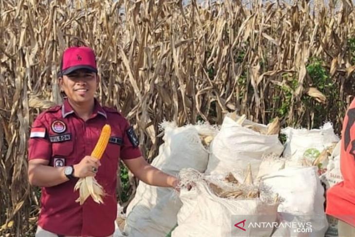 Rutan Labuhan Deli panen raya jagung sebanyak 25 ton