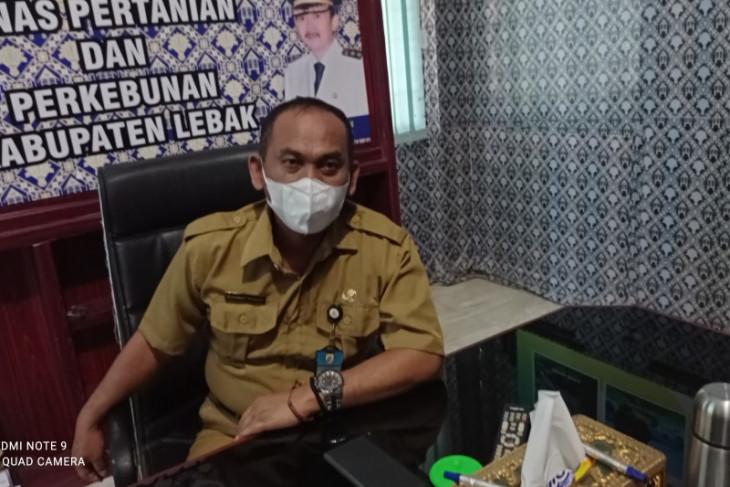 Dinas Pertanian Kabupaten Lebak catat lima hektare sawah puso