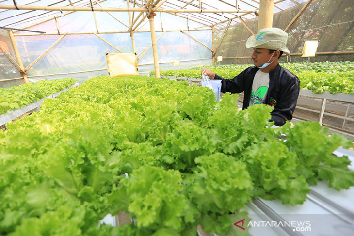Pemanfaatan teknologi digital untuk pertanian