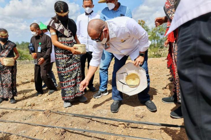 LaNyalla: Impor bukan solusi atasi tingginya harga jagung
