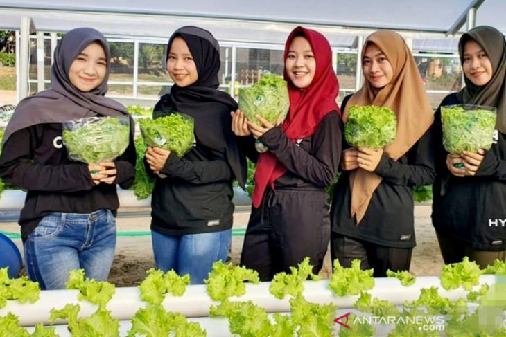 BUMDes Mekar Jaya di Tapin hasilkan uang dan tekan stunting dengan sayur hidroponik