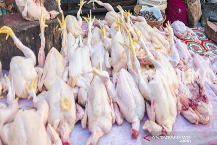 Harga daging ayam ras  naik lagi di Sumut