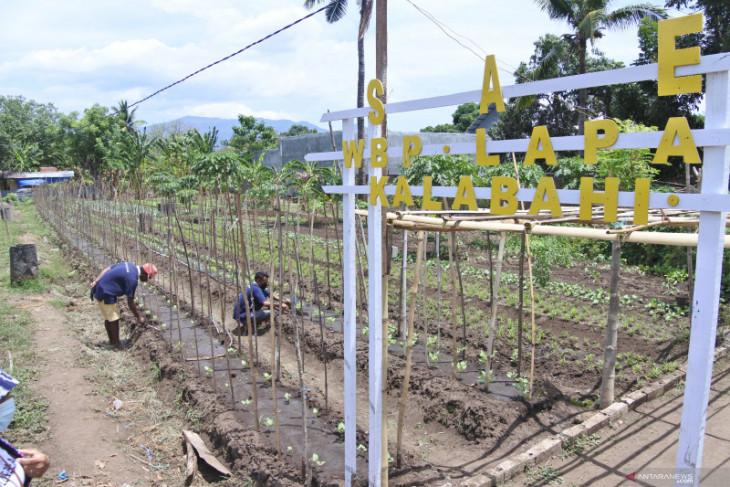 Warga binaan olah kosong jadi kebun sayur