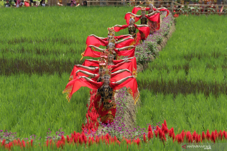 Pesona Wisata Persawahan Banyuwangi