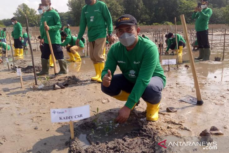 PT Timah tanam ribuan bibit mangrove di Teluk Rubiah Mentok