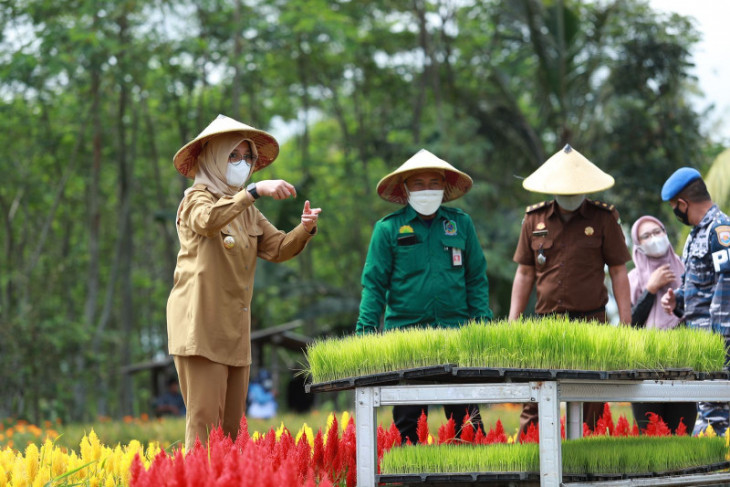 Festival Padi Banyuwangi untuk pertahankan lahan pertanian pangan berkelanjutan