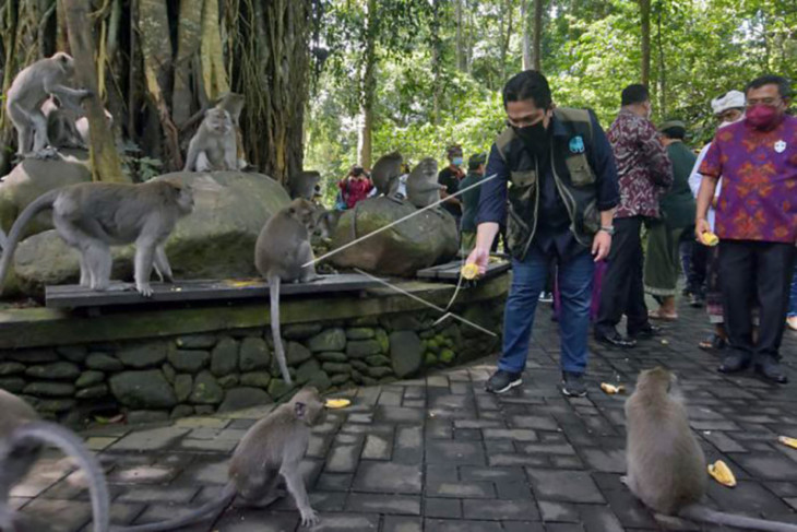 Menteri BUMN tinjau objek wisata Monkey Forest