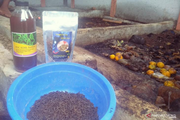 Warga Kabupaten Penajam Paser Utara pelopori budi daya lalat hitam