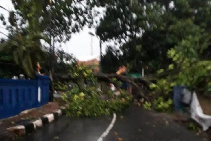 Evakuasi pohon tumbang akibat hujan dan angin kencang, Damkar Depok kerahkan tujuh tim