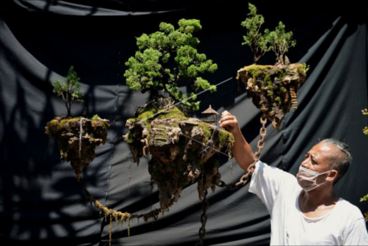 Bonsai melayang jadi topik viral