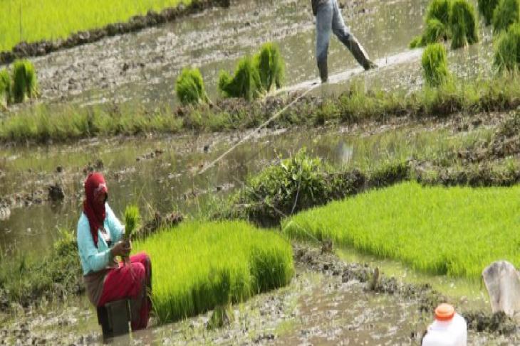 DPRA finalkan raqan perlindungan lahan pertanian dan pangan berkelanjutan