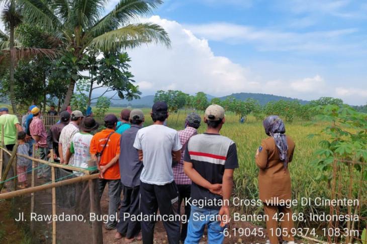Cross Village Visits, inovasi metode penyuluhan berbasis partisipasi aktif petani