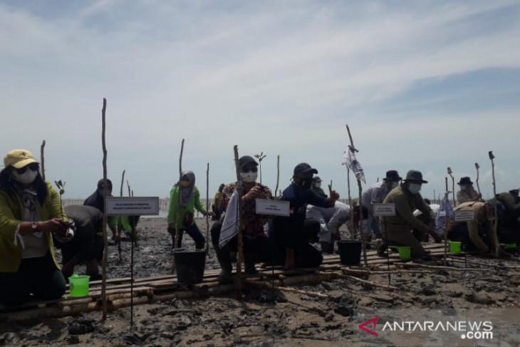 Pemkab Bangka Tengah targetkan tanam 99.000 bibit mangrove