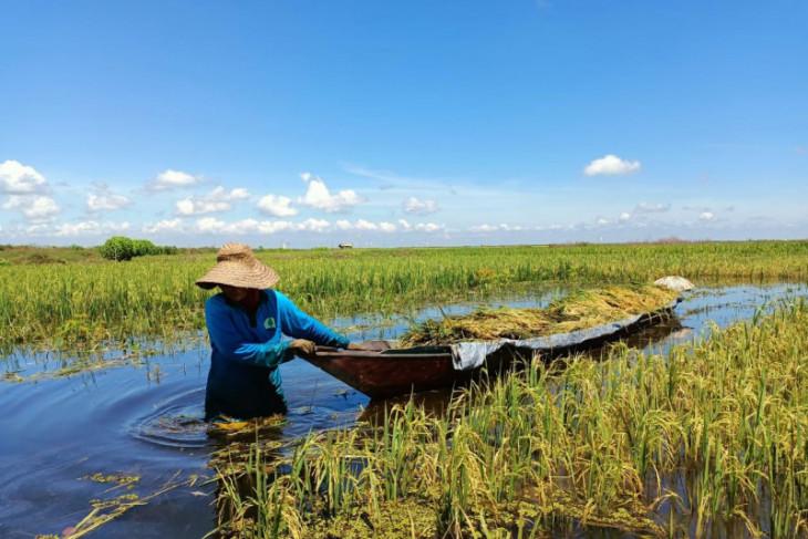 BRGM terus mencetak petani inovatif olah lahan gambut berkelanjutan