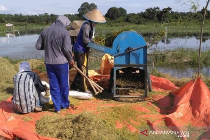 Pemprov Jambi berikan bantuan benih untuk 63 ribu hektar lahan pertanian