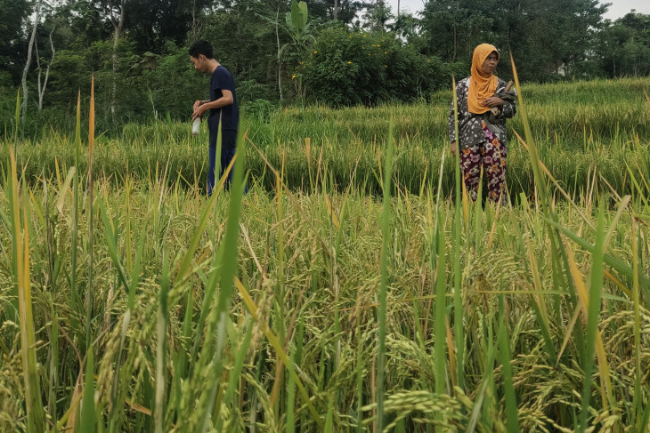 Palangka Raya Mayor urges youth to help develop agricultural sector