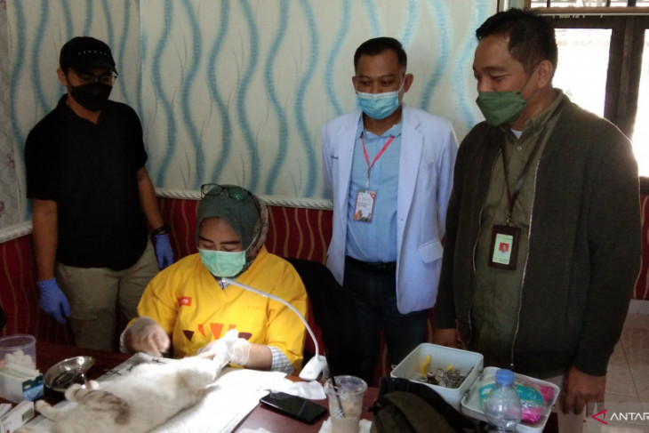 Balai Veteriner Banjarbaru vaksinasi dan kastrasi ratusan hewan