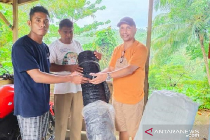 Pemuda Lohiatala Maluku kembangkan bibit pala sambung pucuk