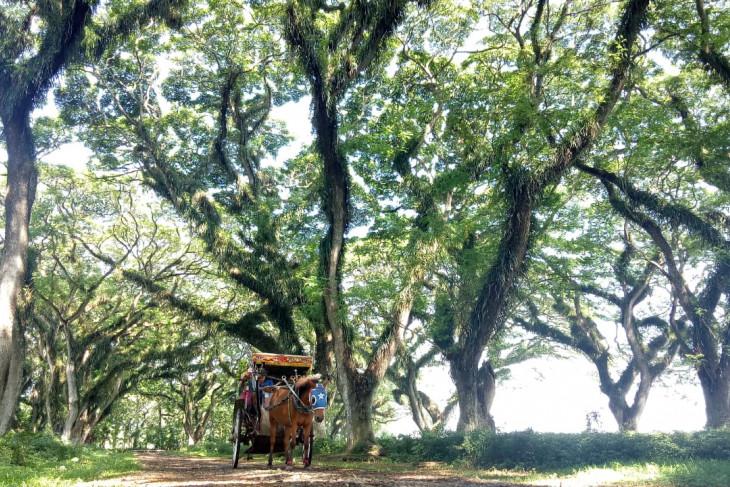 Pariwisata dibuka, Pemkab Banyuwangi luncurkan angkutan gratis untuk wisatawan