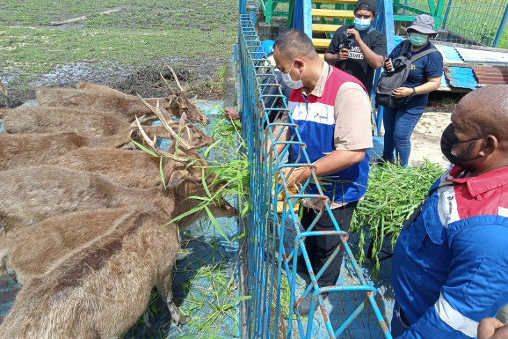 Kilang Pertamina Internasional Kasim lindungi rusa dan kasuari