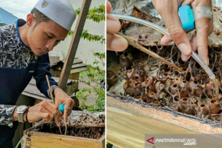 HSU residents beekeeping kelulut for honey