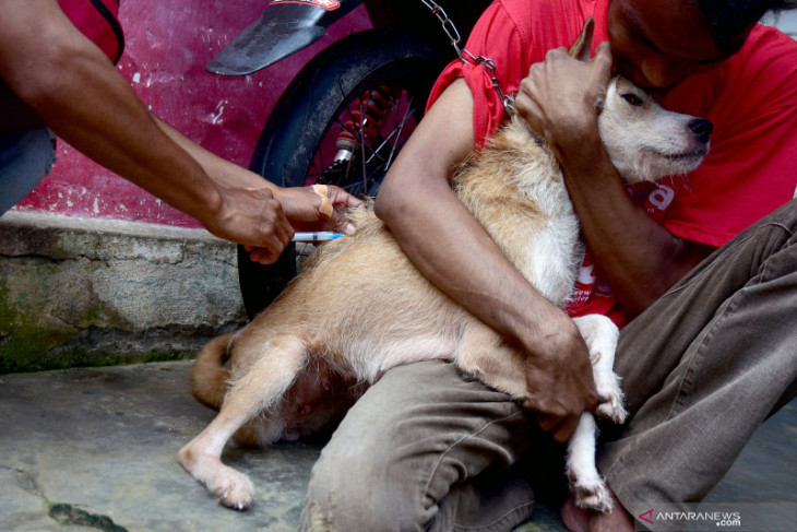 Puluhan hewan peliharaan di Ambon disuntik vaksin rabies intensifkan kesadaran warga