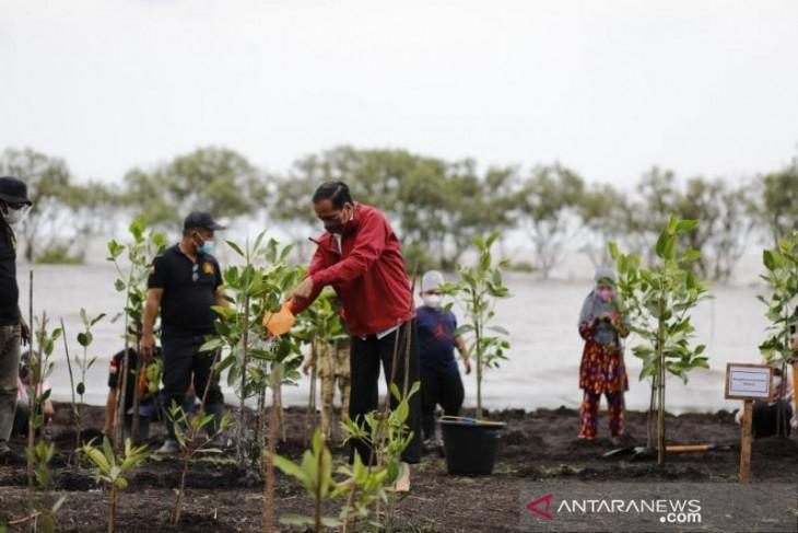Presiden tanam mangrove di pulau terdepan Bengkalis