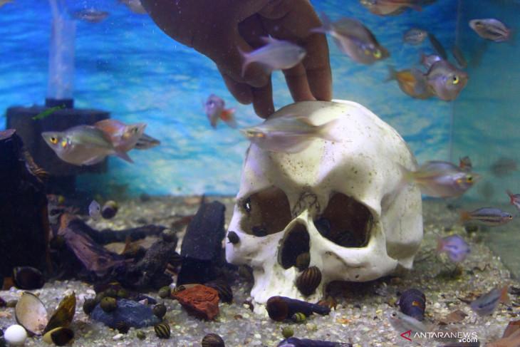 Upaya Pengusaha Ikan Hias Meningkatkan Penjualan