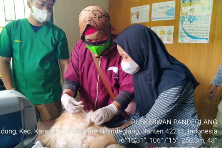 Cegah Penularan Rabies, Puskeswan Pandeglang Vaksinasi Ratusan Hewan Penular Rabies