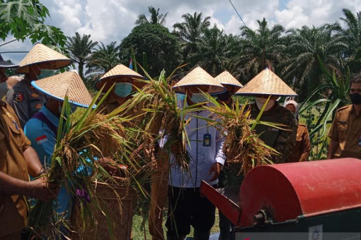 Sekolah Lapangan Iklim tingkatkan produksi padi Batanghari