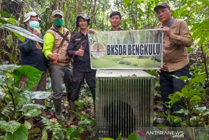 Seekor Owa Siamang jantan dilepasliarkan di TWA Bukit Kaba