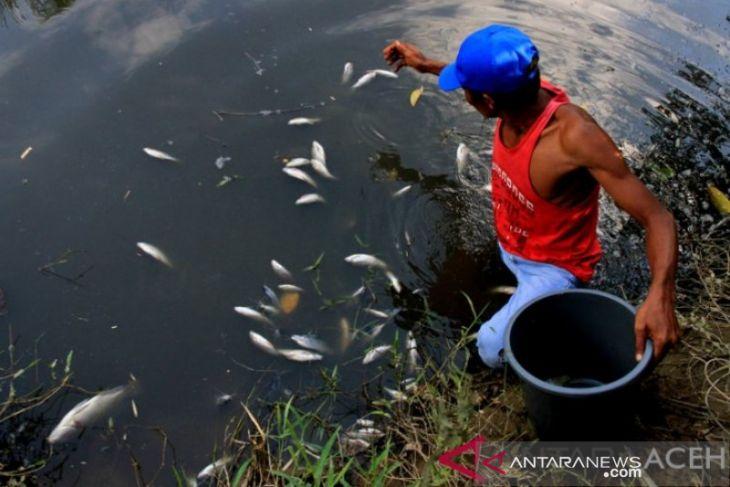 DLHK telusuri kasus kematian ikan di sungai sekitar kebun PT Socfindo Nagan Raya