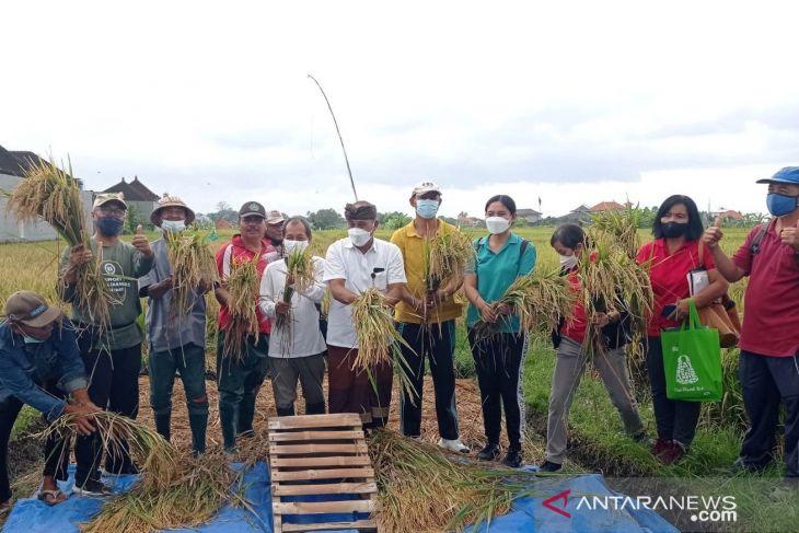Dinas Pertanian Denpasar bersama ALC promosikan pertanian organik