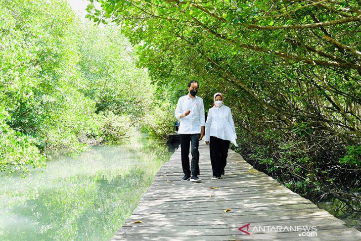 Pemerintah umumkan luas mangrove jadi 3,364 juta hektare pada 2021