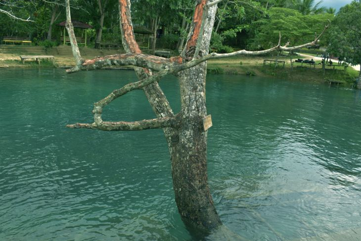 Peluang usaha di kejernihan Kali Biru dan masalah pariwisata Papua