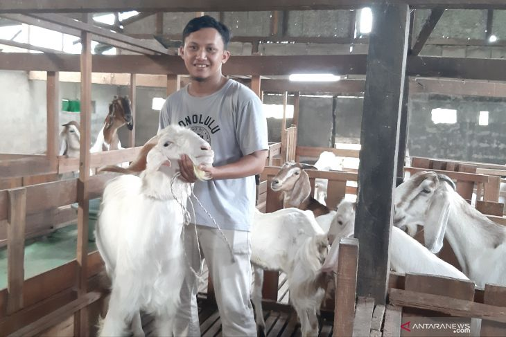 Fauzan, peternak milenal berhasil budidaya kambing beromset ratusan juta rupiah