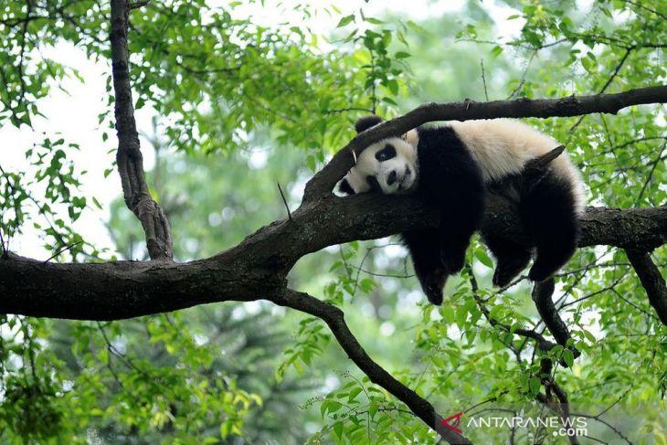 China sediakan Rp3,3 triliun untuk perlindungan keanekaragaman hayati