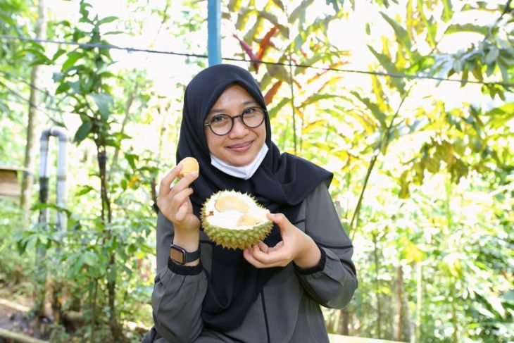 Menikmati durian boneng di kebun Songgon Banyuwangi