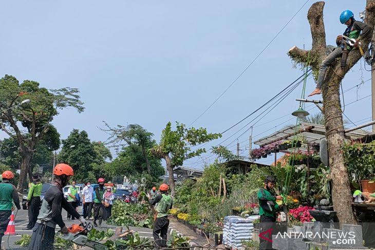Disperumkim Bogor targetkan tambah 660 pohon ber-KTP