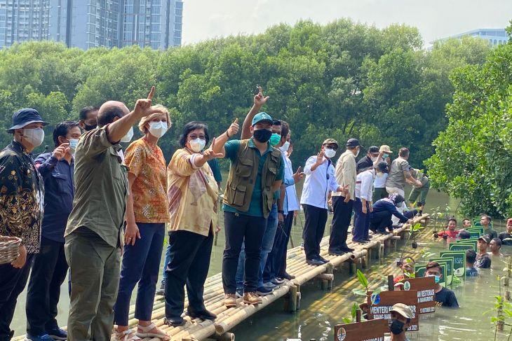 Indonesia to accelerate mangrove rehabilitation: minister