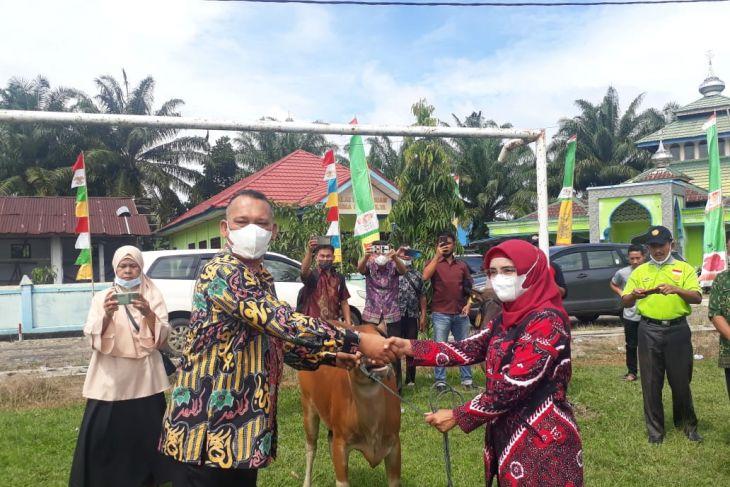 Mukomuko bagikan ratusan sapi kepada petani