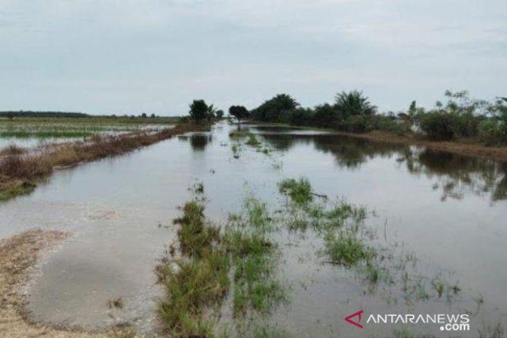 600 hektare lahan pertanian di Babulu Kabupaten Penajam terendam banjir
